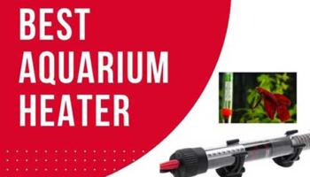 Best Aquarium Heater – Reviews and Buying Guides 2021