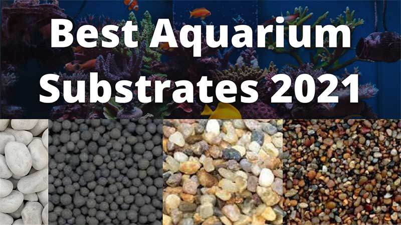 Best Aquarium Substrates PalashBD