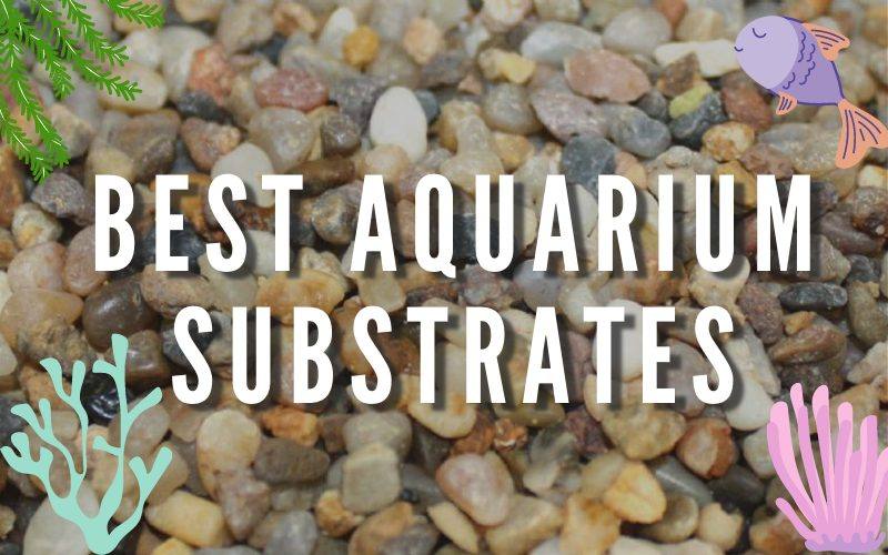 Best Aquarium Substrates