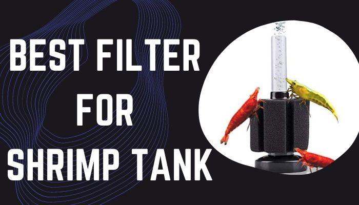 Best Filter For Shrimp Tank